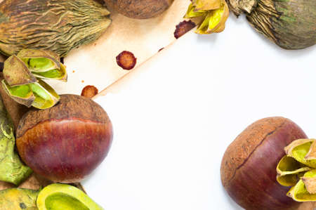 A background with fresh raw chestnuts and dried plants and place for your text. Stock Photo