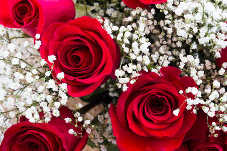 A bouquet of beautiful red roses with tiny white flowers stock photo a bouquet of beautiful red roses with tiny white flowers stock photo 72478071 mightylinksfo