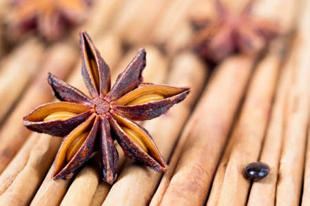 anisetree: A star anise with a seed on cinnamon sticks. Selective focus.