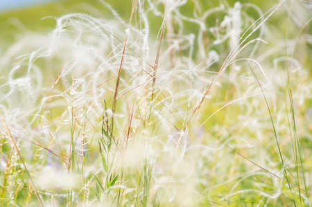 A background with beautiful feather grasses.