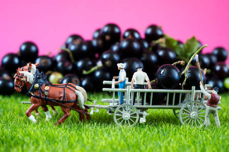 An agricultural photo of working toy farmers and a cart, which is full of black currant. Banco de Imagens