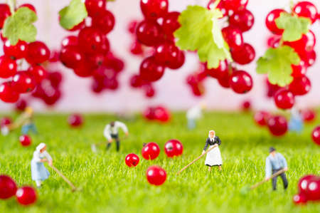 An agricultural photo of working toy farmers, gathering red currant. Focus on a woman in black clothes. Banco de Imagens