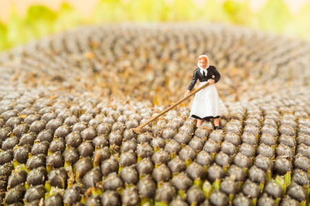 A farming toy woman on the middle of a sunflower. Banco de Imagens