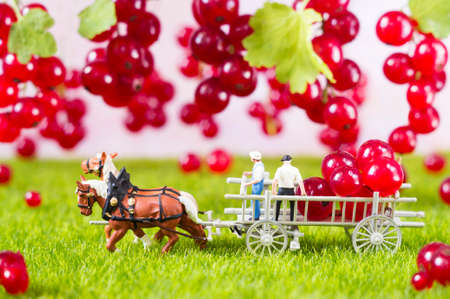 An agricultural photo of toy farmers, carrying red currant.