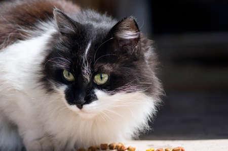 A portrait of a fluffy cat. Banco de Imagens