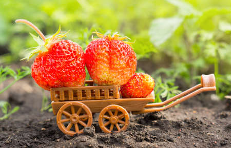 Ripe red strawberry on a toy cart in the garden.