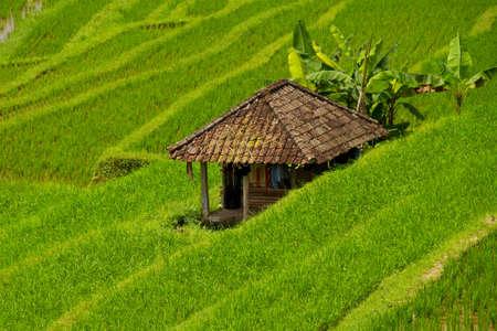 gradas: Las terrazas de arroz de Jatiluwih, Bali