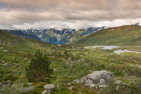 tableland: Landscape of Hardangervidda near Odda
