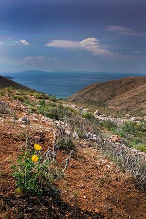 krk: Coast with flower in Krk, Croatia Stock Photo