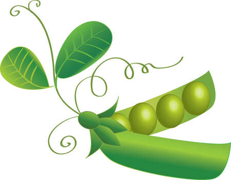 green peas with leafs and beans Illustration