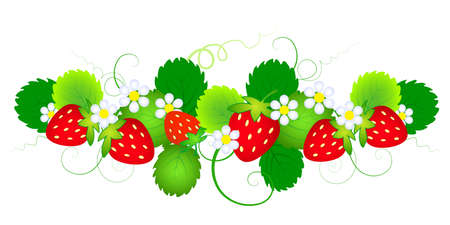 strawberry with leafs and flowers an a white backgrownd