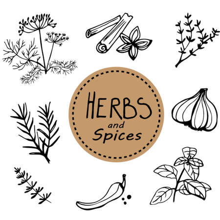 Hand drawn vintage illustration  herbs and spices