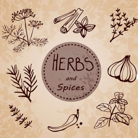 Hand drawn vintage illustration  herbs and spices Imagens - 45767724