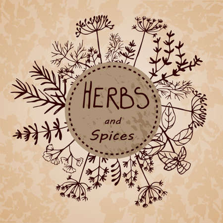 Vector background with hand drawn herbs and spices Organic and fresh spices illustration. 向量圖像