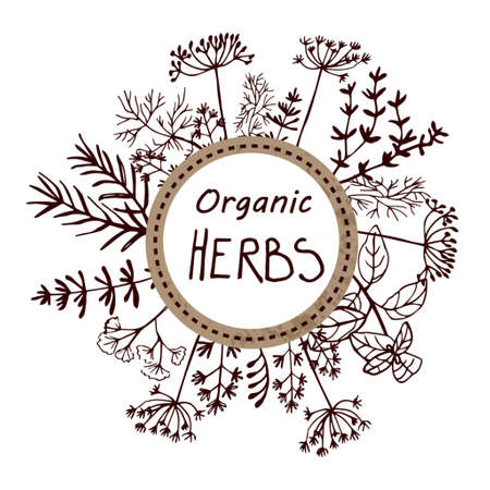 Vector background with hand drawn herbs and spices Organic and fresh spices illustration. Illustration
