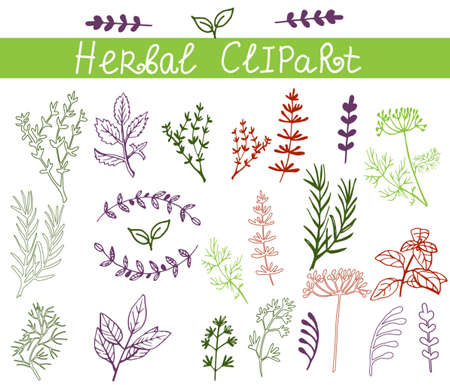 Vector background with hand drawn herbs and spices Organic and fresh spices illustration. 版權商用圖片 - 45767752