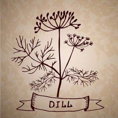 grange: Dill herb with leaf and flower isolated on grange background hand drawn Illustration