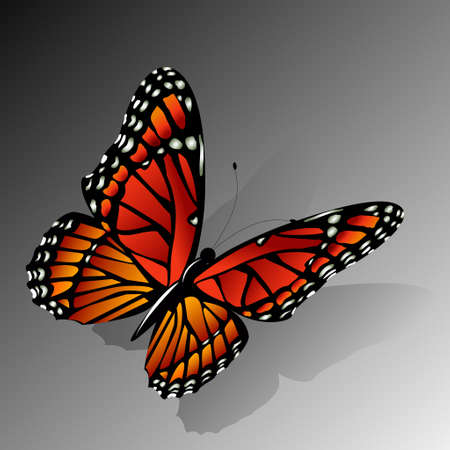 monarch butterfly: The Monarch butterfly Danaus plexippus vector on gradient background folded