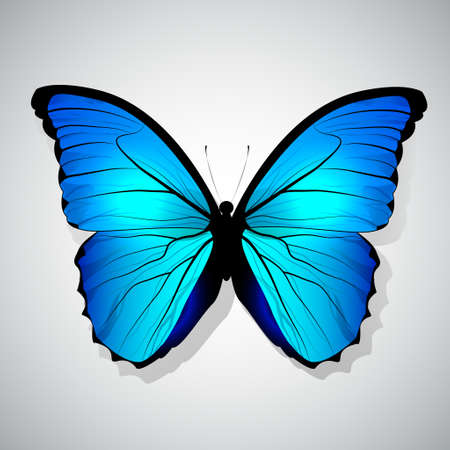 butterfly isolated: Vector Cartoon Blue Butterfly isolated on a background
