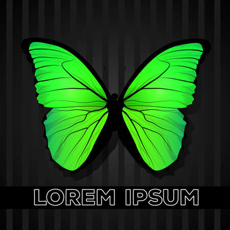 butterfly isolated: Yellow-green butterfly, isolated on grey background with stripes Illustration