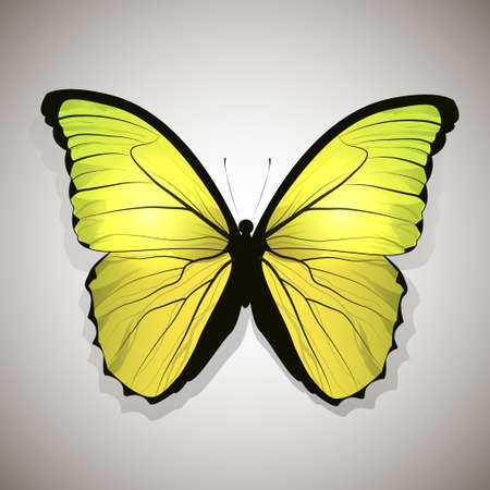 yellow butterfly: Yellow butterfly, isolated on white gradient background