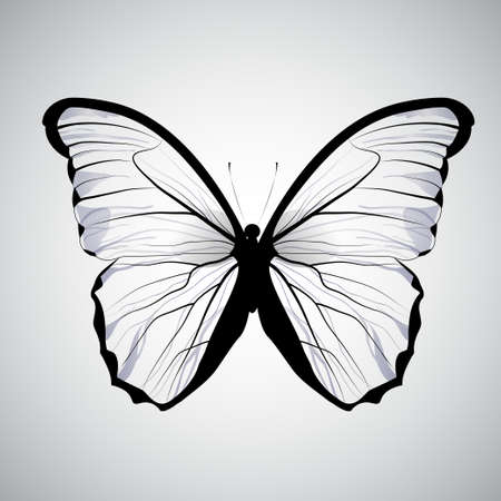 butterfly isolated: transparent butterfly, isolated on white gradient background Illustration