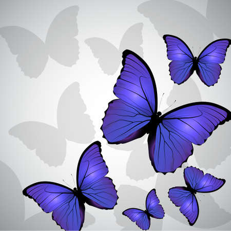butterfly background: Floral background on white  with butterfly blue