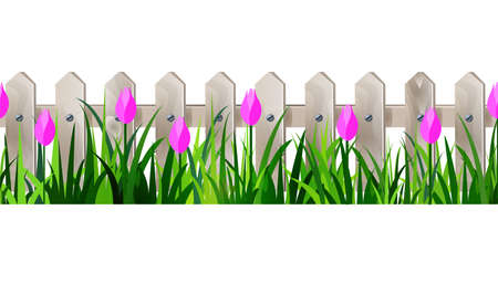 tulips in green grass: Green Grass and white wooden fance seamless isolated clip art vector on white with rose tulips Illustration