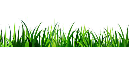 grass close up: Green Grass seamless  isolated clip art on white