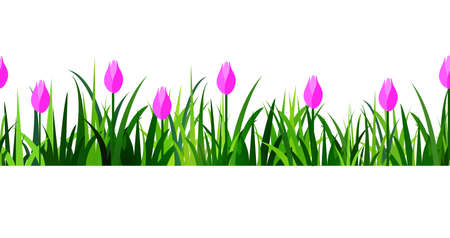 tulips in green grass: Green Grass and  seamless isolated clip art on white with rose tulips