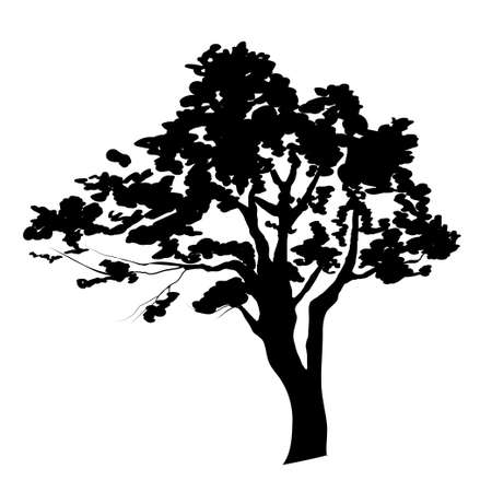 Silhouette of tree isolated on white background Vector Illustration