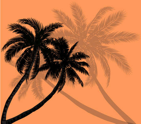 subtropical: Vector palm trees silhouettes on orange background with grey silhouettes Illustration