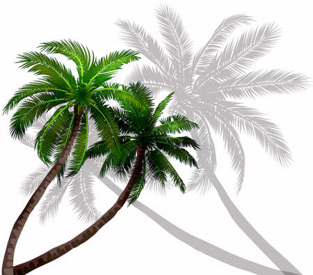 Vector palm trees with green leaves on white background with grey silhouettes