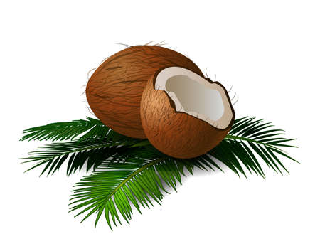 husk: Coconuts with leaves Vector illustration on isolated white background