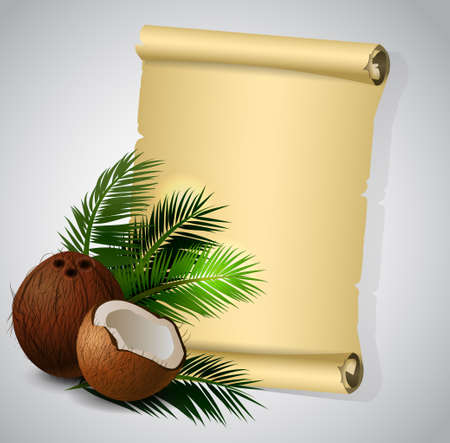 slit: Coconut tropical nut fruit with cut vector illustration isolated with old grange paper roll