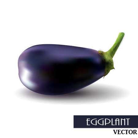close up food: One fresh eggplant over white background clip-art vector illustration Illustration