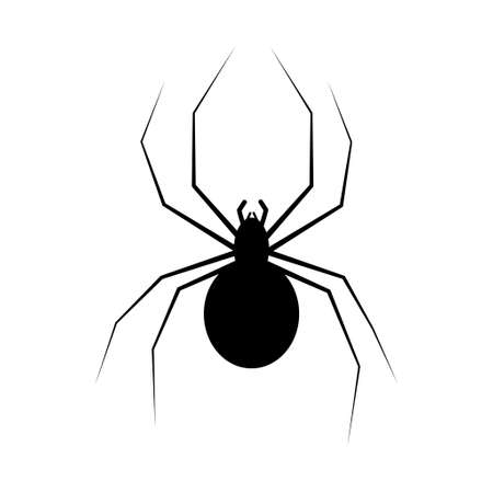 hairy legs: spider isolated on white could be used for your Halloween designs