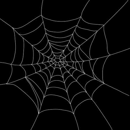 morning dew: a spider web isolated on black vector illustration could be used for Halloween designs