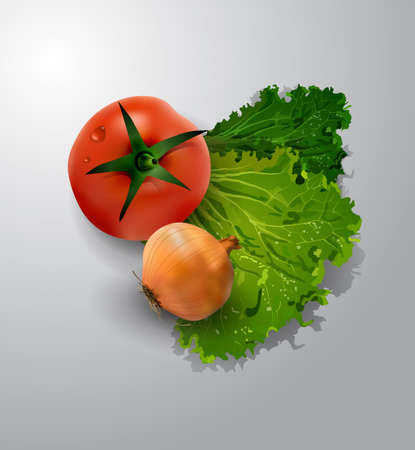 Vector illustration of fresh green salad tomato and onion on the white background