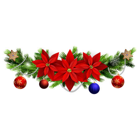 evergreen: Christmas decoration with evergreen treess holly and poinsettia isolated