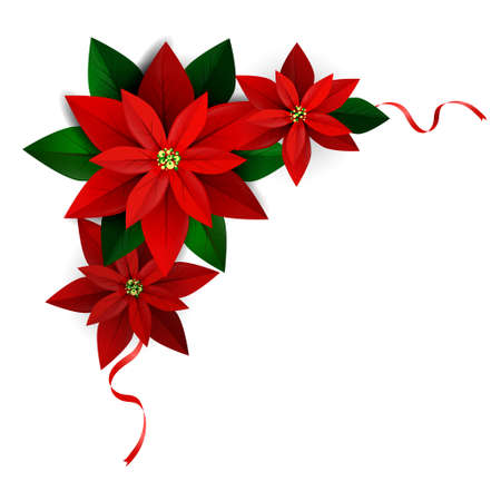 Christmas corner decoration on white Poinsettia with ribbons Vector for you design