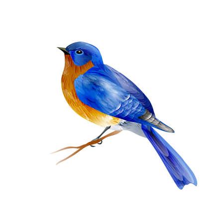Bird of Spring vector Vettoriali