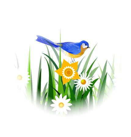Spring blue bird