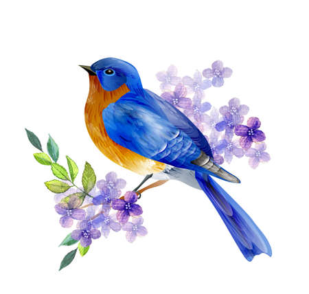 Bird of Spring vector Illustration