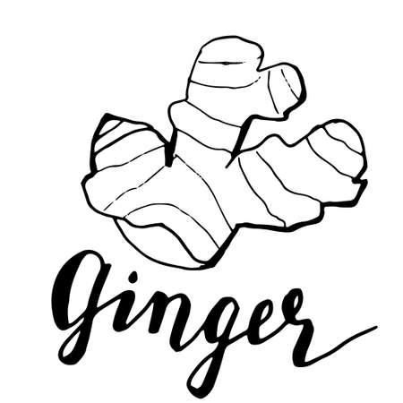 ginger vector sketch