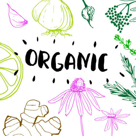 Organic - medicinal plants collection. Vector hand drawn isolated objects on white