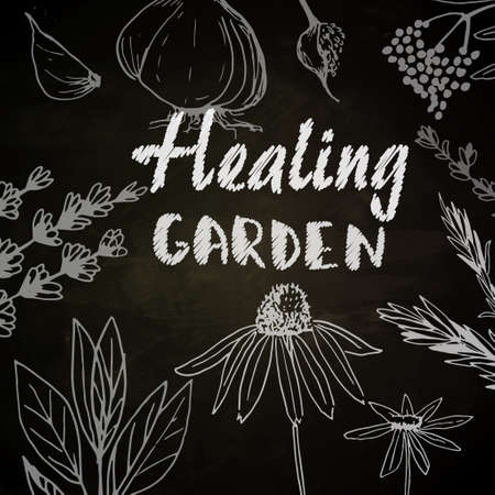 Healing garden - medicinal plants collection. Vector hand drawn isolated objects on white 向量圖像