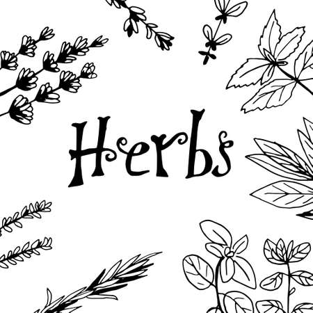 Herbs and medicinal plants collection. Vector hand drawn isolated objects on white background. Illustration