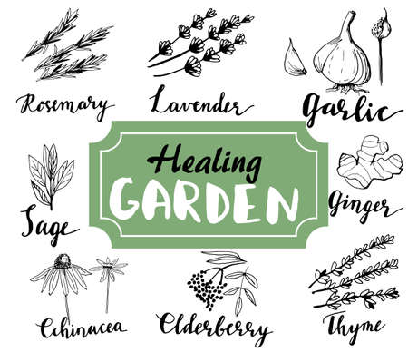 Herbs and medicinal plants collection. Vector hand drawn isolated objects on white