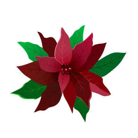 Red flower poinsettia on white. Vector isolated Standard-Bild - 132119255